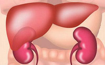 Darm, Leber und Niere sind nur gemeinsam gesund