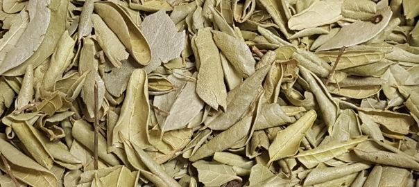 Boldo Blätter für Magen und Darm